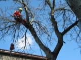 4. fraza pielęgnacja drzew