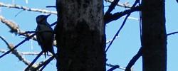 Chirurgia drzew, wycinka drzew, zalesianie i inne usługi w ramach gospodarki leśnej - LAS-WOOD Bochnia, Brzesko, Kraków, Tarnów, Nowy Sącz