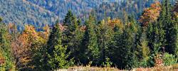 Wycinka drzew, wywóz z lasu, zalesianie i inne usługi - Gospodarka leśna LAS-WOOD Brzesko, Bochnia, Tarnów, Kraków, Nowy Sącz